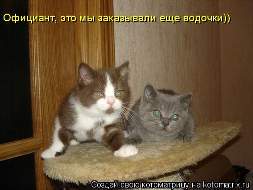Котоматрица: Официант, это мы заказывали еще водочки))