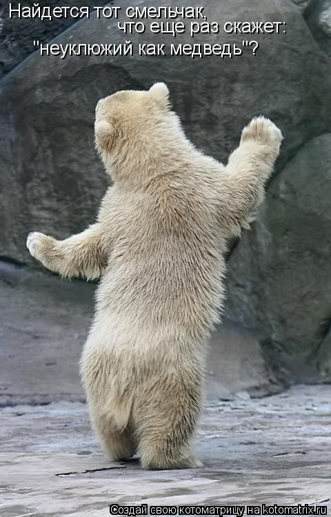 """Котоматрица: Найдется тот смельчак,  что еще раз скажет:  """"неуклюжий как медведь""""?"""