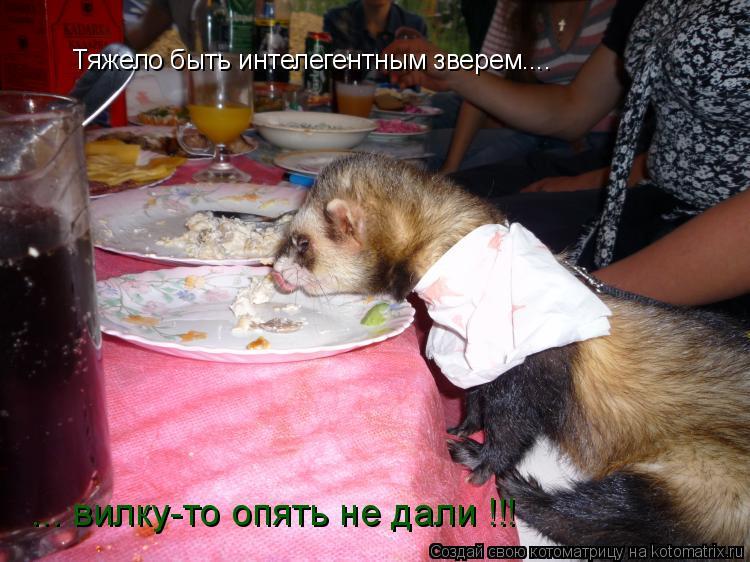 Котоматрица: Тяжело быть интелегентным зверем.... Тяжело быть интелегентным зверем.... ... вилку-то опять не дали !!!