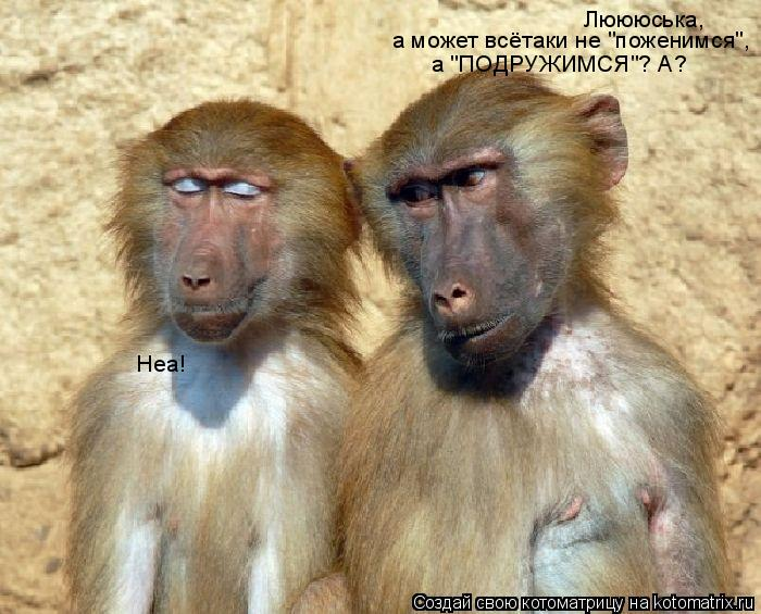 "Котоматрица: Люююська, а может всётаки не ""поженимся"",  а ""ПОДРУЖИМСЯ""? А? Неа!"