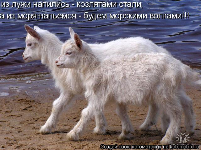 Котоматрица: из лужи напились - козлятами стали,  а из моря напьемся - будем морскими волками!!!