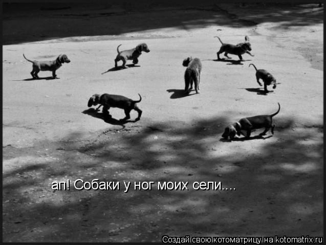 Котоматрица: ап! Собаки у ног моих сели....