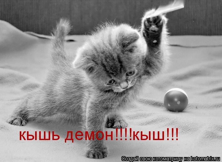Котоматрица: кышь демон!!!!кыш!!!
