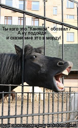 """Котоматрица: Ты кого это """"Канякой"""" обозвал? А ну подойди  и скажи мне это в морду!"""