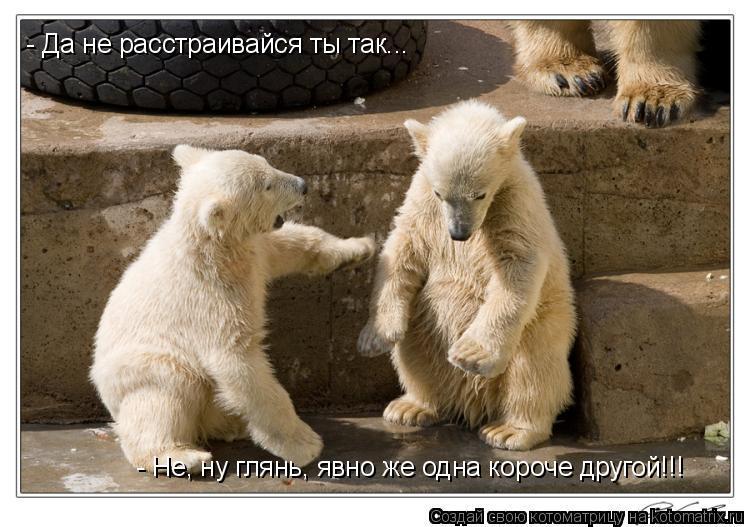Котоматрица: - Да не расстраивайся ты так... - Не, ну глянь, явно же одна короче другой!!!
