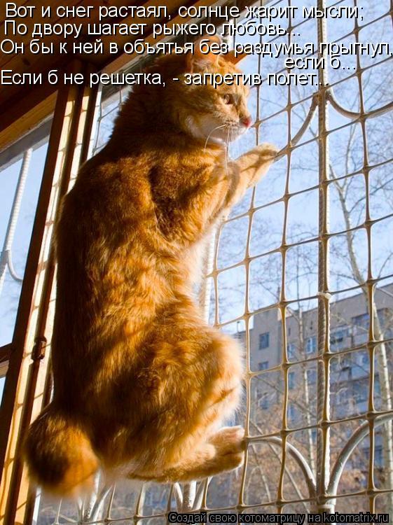Котоматрица: Вот и снег растаял, солнце жарит мысли; По двору шагает рыжего любовь... Он бы к ней в объятья без раздумья прыгнул,  если б... Если б не решетка,