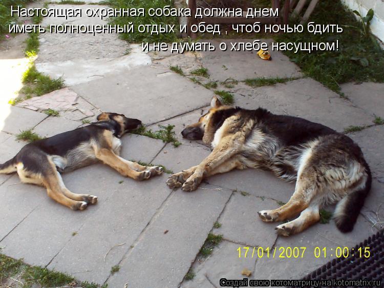 Котоматрица: Настоящая охранная собака должна днем  иметь полноценный отдых и обед , чтоб ночью бдить и не думать о хлебе насущном!