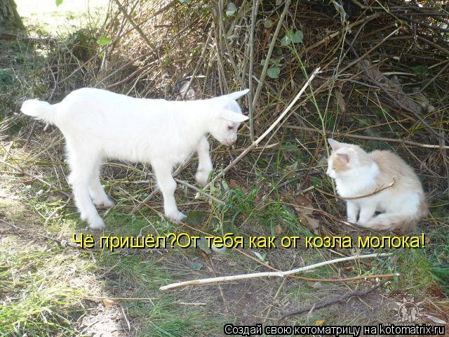 Котоматрица: Чё пришёл?От тебя как от козла молока!