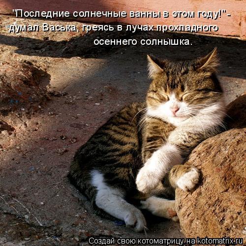 """Котоматрица: """"Последние солнечные ванны в этом году!"""" - думал Васька, греясь в лучах прохладного осеннего солнышка."""