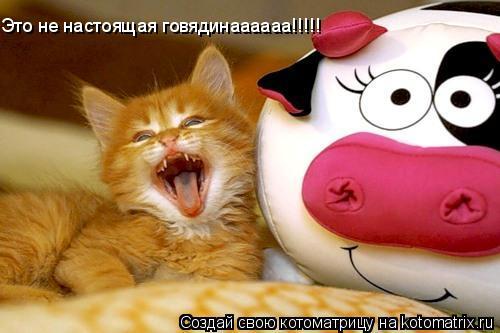 Котоматрица: Это не настоящая говядинаааааа!!!!!