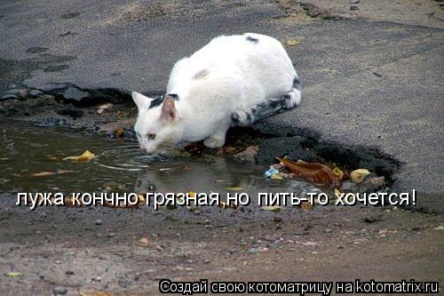 Котоматрица: лужа кончно грязная,но пить-то хочется!