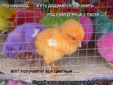 Котоматрица: нуу нарооод..... и кто додумался положить  под курицу яйца с пасхи....? вот! получайте! все цветные......