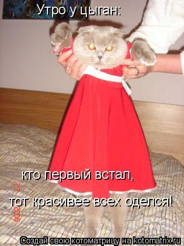 Котоматрица: Утро у цыган:  кто первый встал,  тот красивее всех оделся!