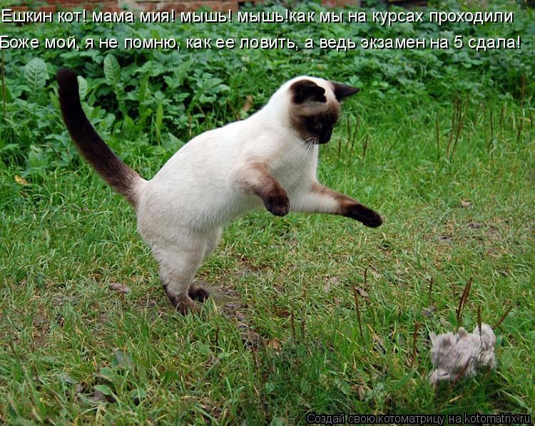 Котоматрица: Ешкин кот! мама мия! мышь! мышь!как мы на курсах проходили Боже мой, я не помню, как ее ловить, а ведь экзамен на 5 сдала!