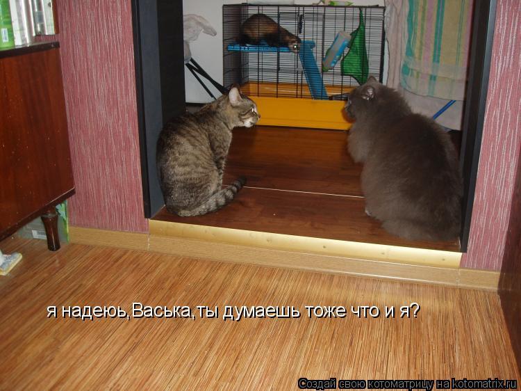 Котоматрица: я надеюь,Васька,ты думаешь тоже что и я?
