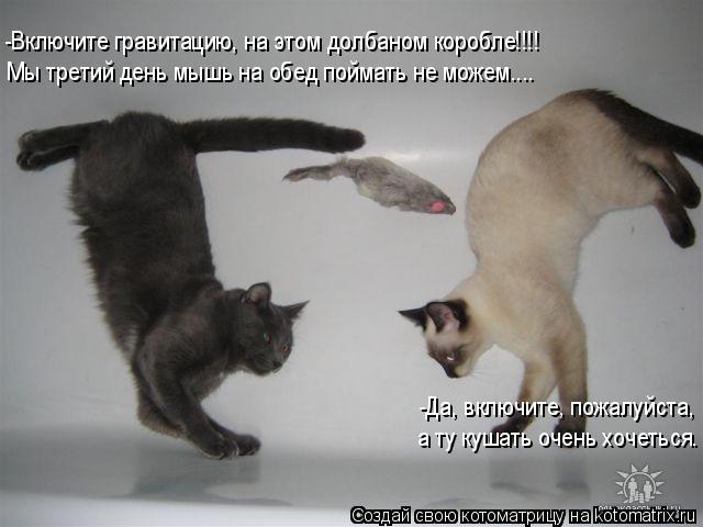 Котоматрица: -Включите гравитацию, на этом долбаном коробле!!!! Мы третий день мышь на обед поймать не можем.... -Да, включите, пожалуйста, а ту кушать очень