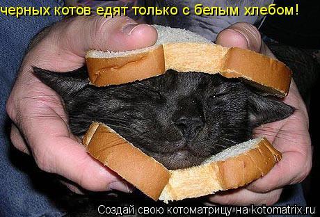 Котоматрица: черных котов едят только с белым хлебом!