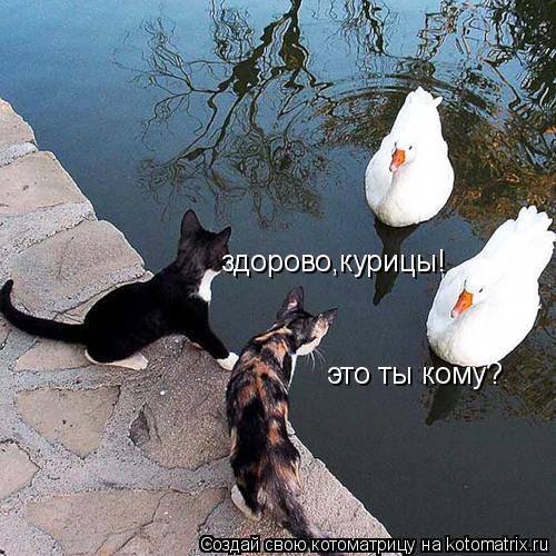 Котоматрица: здорово,курицы! это ты кому?