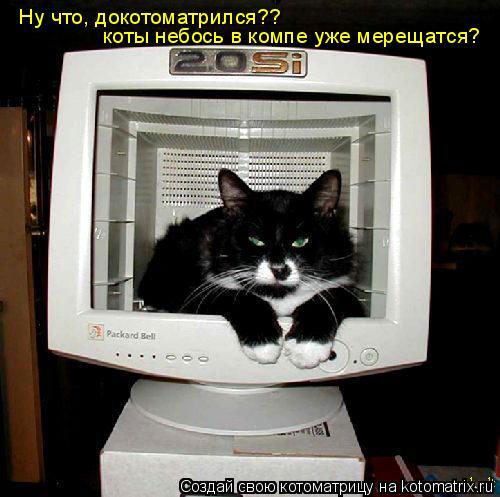 Котоматрица: Ну что, докотоматрился?? коты небось в компе уже мерещатся?