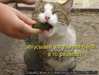 Котоматрица: закусывай,закусывай,Вася, а то развезёт!