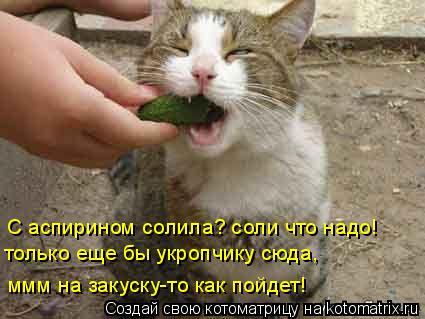 Котоматрица: С аспирином солила? соли что надо! только еще бы укропчику сюда, ммм на закуску-то как пойдет!
