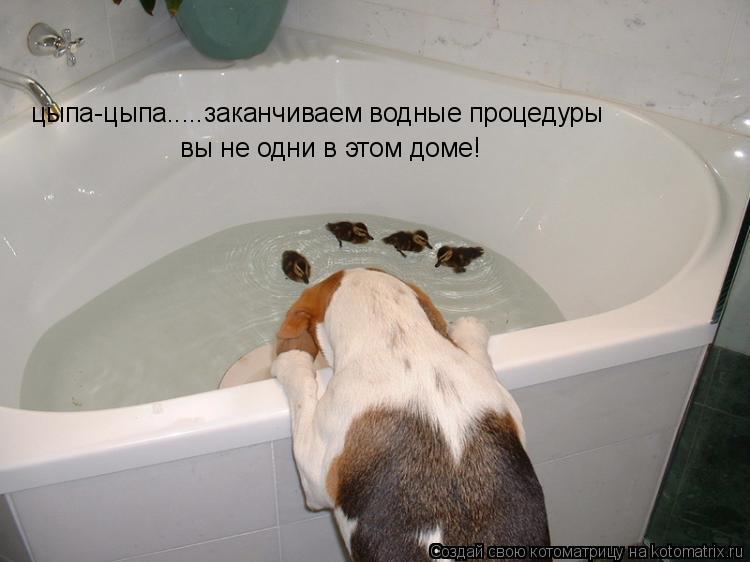 Котоматрица: цыпа-цыпа.....заканчиваем водные процедуры вы не одни в этом доме!