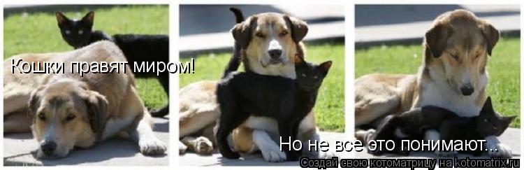 Котоматрица: Кошки правят миром! Но не все это понимают...