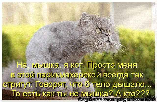 Котоматрица: Не, мышка, я кот. Просто меня в этой парикмахерской всегда так  стригут. Говорят, что б тело дышало...  То есть как ты не мышка? А кто???