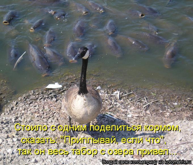 """Котоматрица: Стоило с одним поделиться кормом, так он весь табор с озера привел... сказать: """"Приплывай, если что"""","""