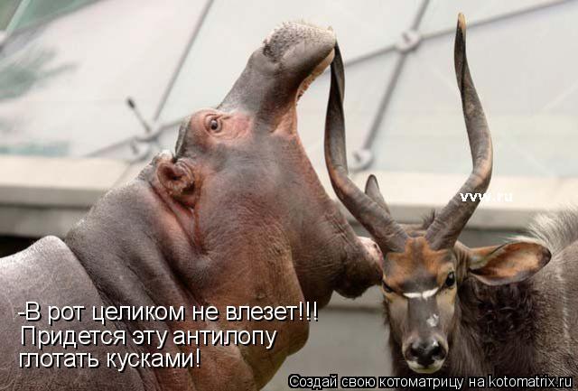 Котоматрица: -В рот целиком не влезет!!! Придется эту антилопу глотать кусками!
