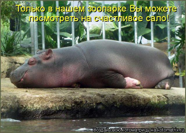 Котоматрица: Только в нашем зоопарке Вы можете посмотреть на счастливое сало!