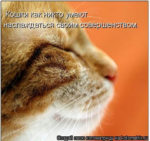 Котоматрица: Кошки как никто умеют  наслаждаться своим совершенством.