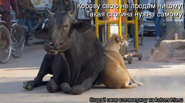 Котоматрица: Корову свою не продам никому!  Такая скотина нужна самому!