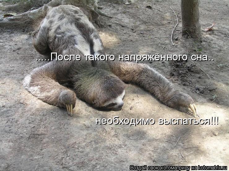 Котоматрица: .....После такого напряжённого сна.. необходимо выспаться!!!