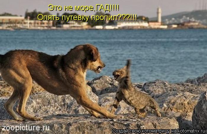 Котоматрица: Это не море,ГАД!!!! Опять путевку пропил???!!!