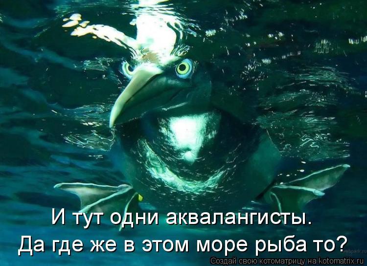 Котоматрица: И тут одни аквалангисты. Да где же в этом море рыба то?