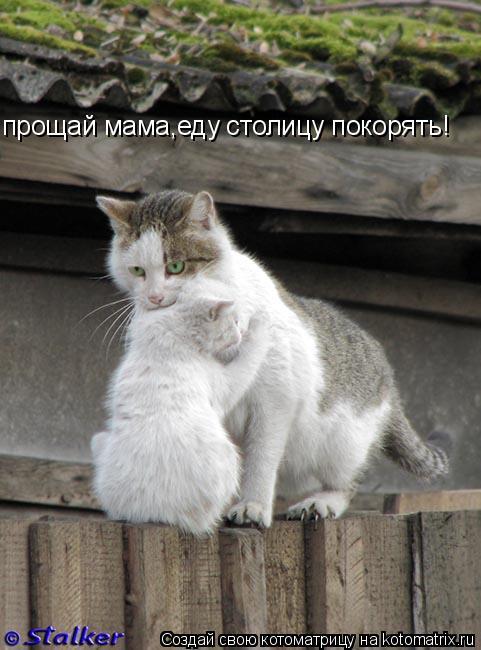 Котоматрица: прощай мама,еду столицу покорять!