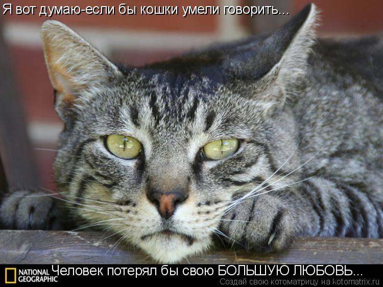 Котоматрица: Я вот думаю-если бы кошки умели говорить... Человек потерял бы свою БОЛЬШУЮ ЛЮБОВЬ...