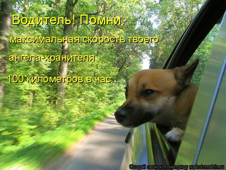 Котоматрица: Водитель! Помни: максимальная скорость твоего ангела-хранителя 100 километров в час...