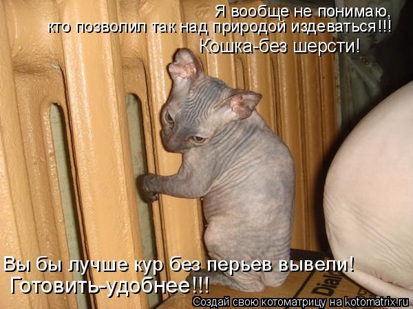 Котоматрица: Кошка-без шерсти! Готовить-удобнее!!! Вы бы лучше кур без перьев вывели! Я вообще не понимаю, кто позволил так над природой издеваться!!!