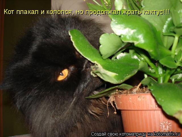Котоматрица: Кот плакал и кололся, но продолжал жрать кактус!!!