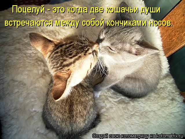 Котоматрица: встречаются между собой кончиками носов.  Поцелуй - это когда две кошачьи души