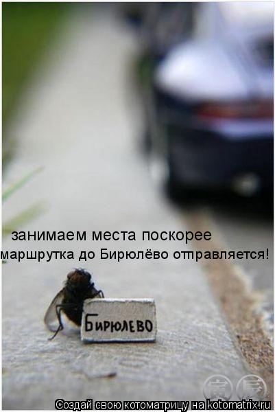 Котоматрица: маршрутка до Бирюлёво отправляется! занимаем места поскорее