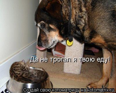 Котоматрица: Да не трогал я твою еду!