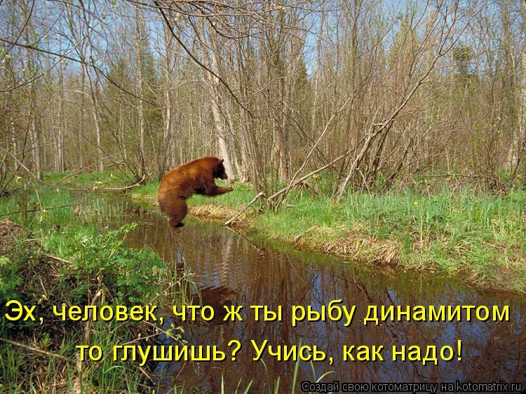 Котоматрица: Эх, человек, что ж ты рыбу динамитом  то глушишь? Учись, как надо!