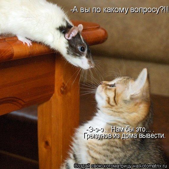 Котоматрица: -А вы по какому вопросу?!! -Э-э-э... Нам бы это... . Грызунов из дома вывести.