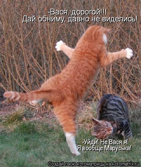Котоматрица: -Вася, дорогой!!! Дай обниму, давно не виделись! -Уйди! Не Вася я! Я вообще Маруська!