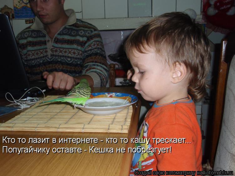 Котоматрица: Кто то лазит в интернете - кто то кашу трескает... Попугайчику оставте - Кешка не побрезгует!