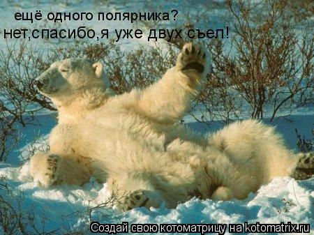 Котоматрица: ещё одного полярника? нет,спасибо,я уже двух съел!