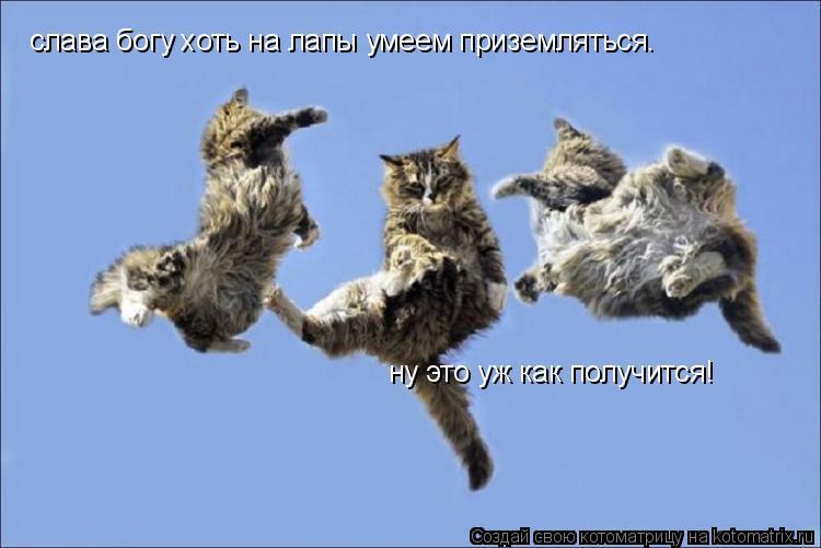 Котоматрица: слава богу хоть на лапы умеем приземляться. ну это уж как получится!